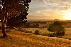 Weide am Sonnenaufgang lizenzfreie stockfotos