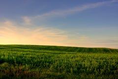 Weide am Sonnenuntergang Stockfoto