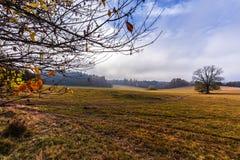 Weide und Bäume im Herbst Stockfotos