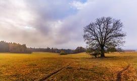 Weide und ein einziger Baum im Herbst Stockfotografie