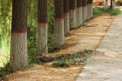 Weide und gefallene Blätter Lizenzfreie Stockfotografie