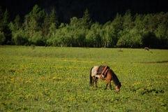 Weide und Pferd Stockbild