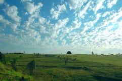 Weide und Vieh Stockfotografie