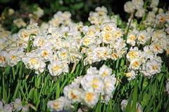 Weide van bloemen Stock Afbeelding