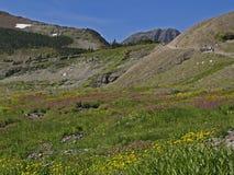 Weide van Bloemen, Geiten en Wandelaars stock fotografie