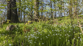 Weide van de de lente de aardige bloem in Noord-Bohemen royalty-vrije stock afbeelding