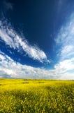 Weide van de de lente de gele bloem Stock Afbeeldingen