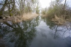 Weide van de Rijn stock afbeeldingen