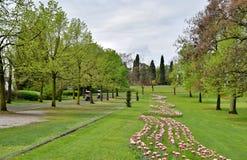 Weide van een park Royalty-vrije Stock Fotografie