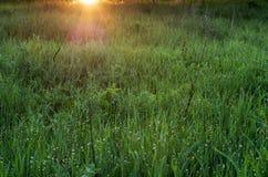 Weide van groen gras met zonstralen royalty-vrije stock afbeelding