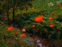 Weide van rode papavers Royalty-vrije Stock Afbeeldingen