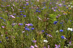 Weide van wilde bloemen Royalty-vrije Stock Afbeelding