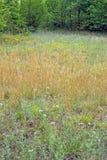 Weide van Wildflowers Royalty-vrije Stock Afbeelding