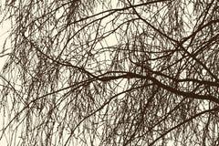 Weide verzweigt sich im Frühjahr Lizenzfreie Stockbilder