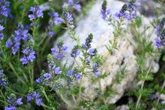 Weide violette bloemen en steen op de achtergrond royalty-vrije stock afbeelding