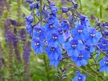 Weide wilde bloemen royalty-vrije stock fotografie