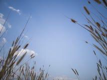Weide, witte wolk en blauwe hemel stock afbeeldingen