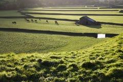 Weide in Yorkshire-Tälern Yorkshire England Lizenzfreie Stockfotos