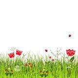 Weide in zonnige de zomerdag Onzelieveheersbeestjes die boven het gras met bloemen vliegen Stock Foto
