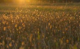 Weide in zonsondergang Stock Afbeelding