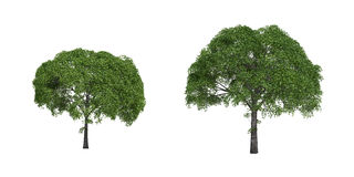 Weidebäume Stockfotografie