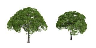 Weidebäume Lizenzfreie Stockfotografie