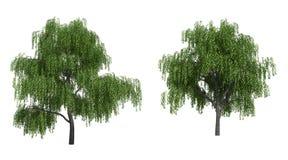 Weidebäume Stockfoto