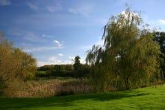 Weidebaum durch Teich Lizenzfreies Stockfoto