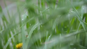 Weidegras na regen stock videobeelden