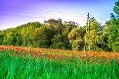 Weidehoogtepunt van bloeiende de zomerbloemen Royalty-vrije Stock Fotografie
