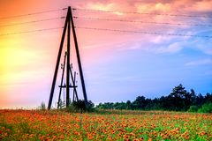 Weidehoogtepunt van bloeiende de zomerbloemen Royalty-vrije Stock Afbeeldingen
