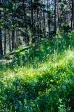 Weidehoogtepunt van bloemen in het bos in de Pyreneeën Royalty-vrije Stock Foto