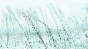 Weideinstallaties onder dalende sneeuw stock footage