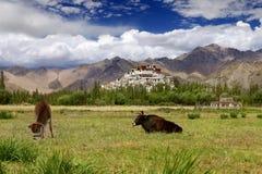 Weideland im Himalaja Lizenzfreies Stockfoto