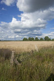 Weidelandschaft im blauen Himmel des Sommers Stockfotos