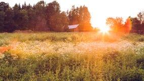 Weidelandschap bij zonsondergang Stock Foto