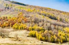 Weidemening met gouden bladeren in de herfst Stock Fotografie