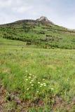 Weiden aan bergen stock foto's