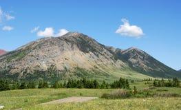 Weiden aan bergen stock afbeelding