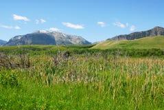 Weiden aan bergen stock fotografie