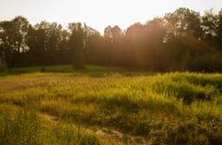 Weiden bij Zonsondergang royalty-vrije stock afbeeldingen