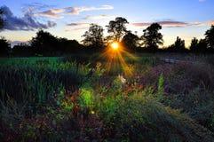 Weiden bij Zonsondergang Stock Foto