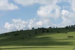 Weiden blauwe hemel en wolken stock afbeeldingen