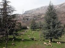 Weiden buiten Gourdon in de Provence Stock Fotografie
