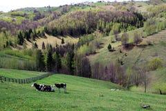 Weiden in de berg Stock Fotografie