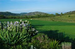 Weiden in de Provence Stock Afbeeldingen