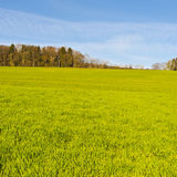 Weiden in der Schweiz Lizenzfreies Stockbild
