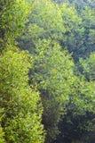 Weiden in einer Gaze Stockbild