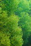 Weiden in einer Gaze Stockbilder