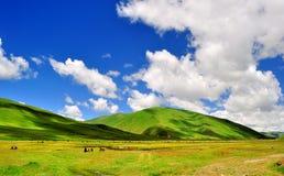 Weiden en bergen stock foto